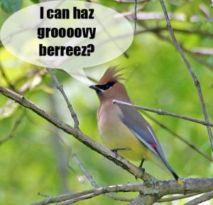 lol bird