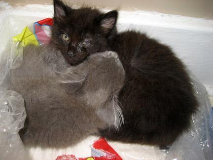 BelleandSebastian-Kittens